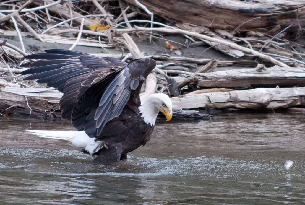 eagleandfeather