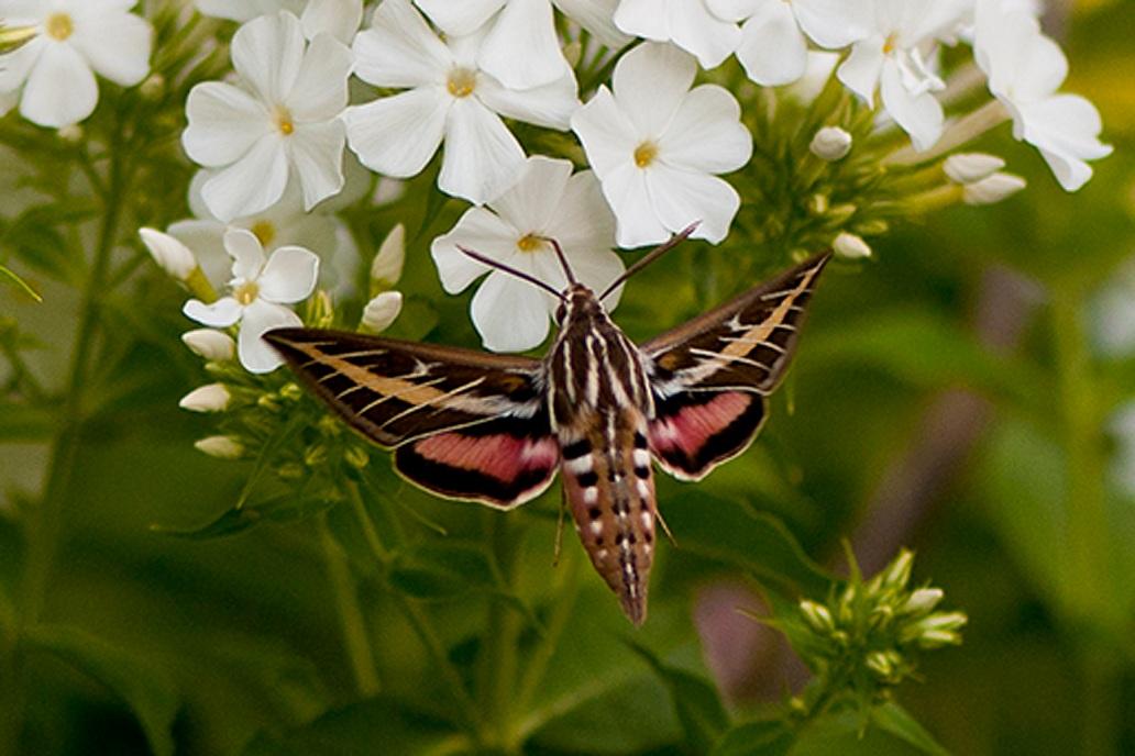 moth1small
